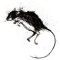Robert Burns – To A Mouse
